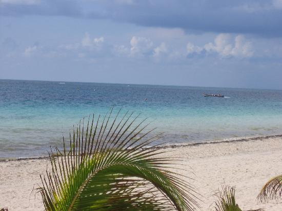 Puerto Morelos Artists' Cooperative: Beach in front of Resturant