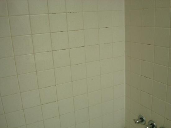 Viking Ocean Front Motel : Mold on the shower wall