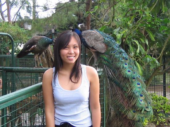 Residence Inn Tagaytay: Residence Inn, Tagaytay