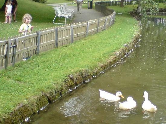 Brekkeparken: a pond