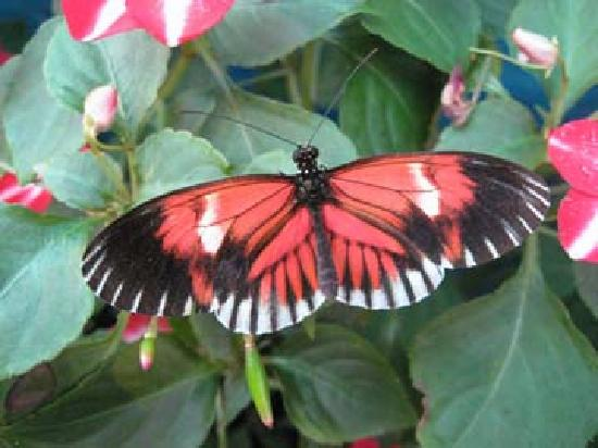 Tiverton, RI: Just one of the many beautiful butterflies here.