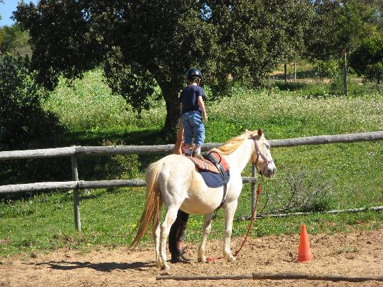 Holistic Riding Center: Sebastian standing on his horse