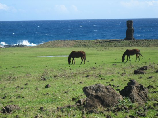 Easter Island, Chile: wild horses