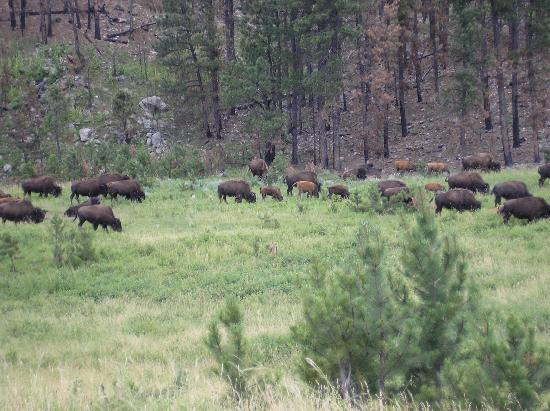 Custer State Park Jeep Tour Reviews