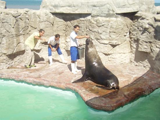 Aquarium: alimentando los entrenadores