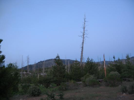 Yosemite Hilltop Cabins: Foresta - still recovering from the fire
