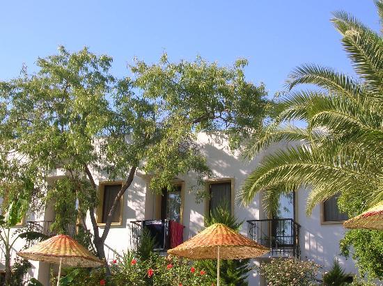 Club Hotel Flora: Terrasses 1er