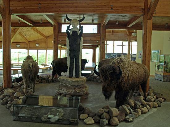 Wanuskewin Heritage Park : Main exhibit of buffalo.
