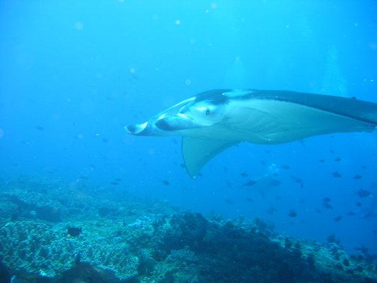 Tofo, Mozambique: Manta reef