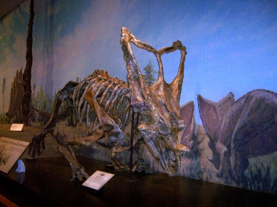 Royal Tyrrell Museum: Display sample at the Museum