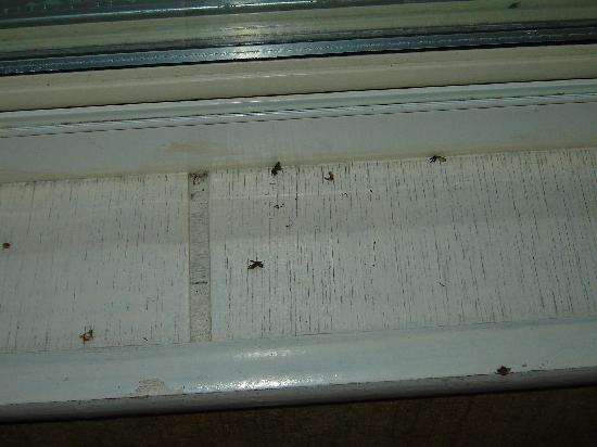 West Yarmouth, MA: Dead flies in window cill