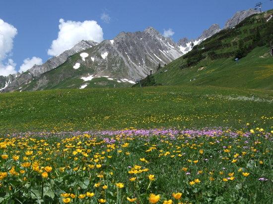 St. Anton am Arlberg, Österreich: wid flowers above St Anton