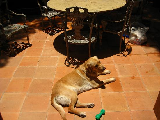 The Red Tree House: Avril, The House Dog