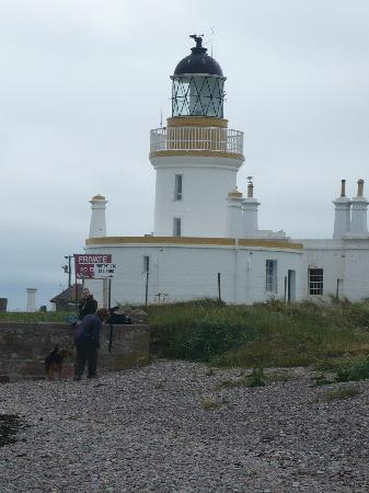 Glebe End Bed and Breakfast: Les phoques et dauphins de Moray Firth