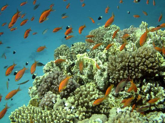 Baron Resort Sharm El Sheikh: Reef2