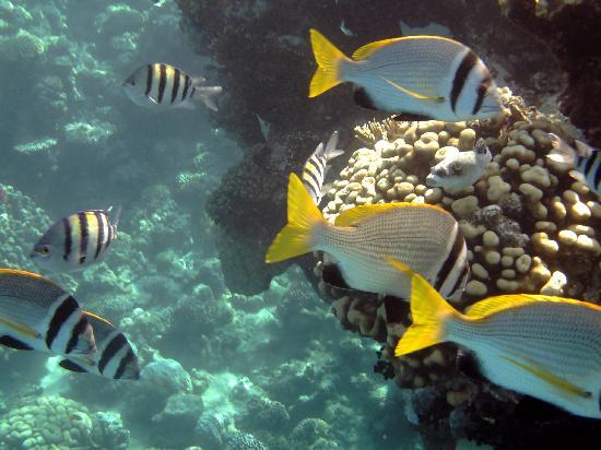 Baron Resort Sharm El Sheikh: Reef3