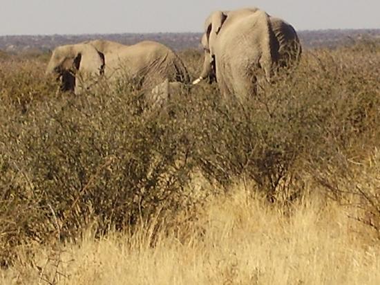 Okambara Elephant Lodge: Elefanten I