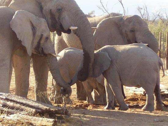 Okambara Elephant Lodge: Elefanten II