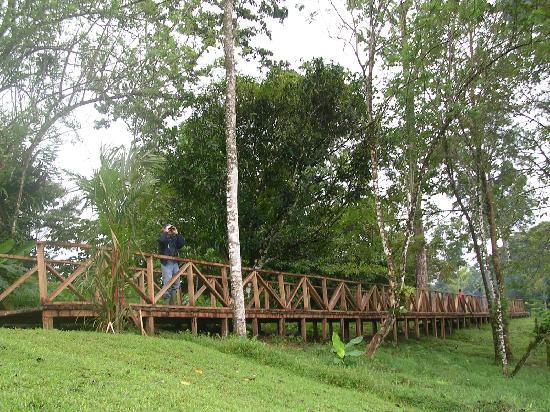 La Anita Rainforest Ranch: Tourist going to the rainforest trail