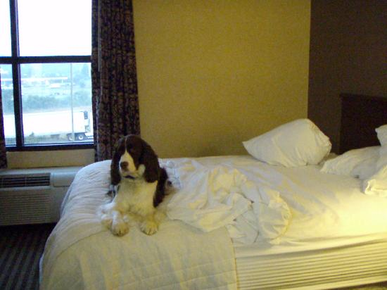 La Quinta Inn & Suites Knoxville Strawberry Plains: My small dog