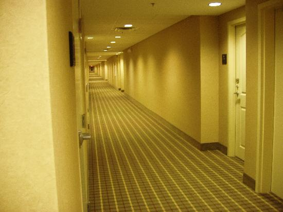 Homewood Suites Louisville East: 4th Floor Corridor