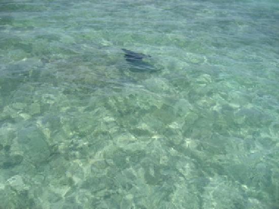 Costa de Cocos: Our mascot of the trip -- the eagle ray