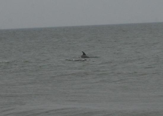 Corolla, Carolina do Norte: Dolphin