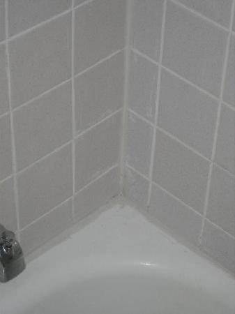 Quality Inn & Suites Albany Airport: shower mold