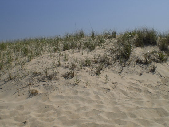 Edgartown, MA: the dunes