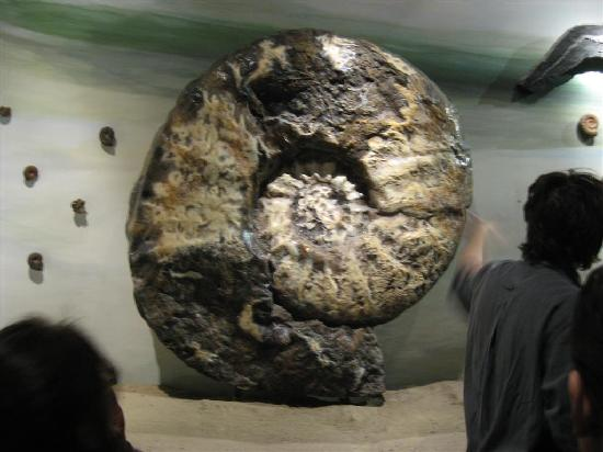 Trelew, Argentina: a giant fosil at the musem 2 meters wide