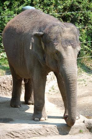 Woodland Park Zoo: Elephant exhibit