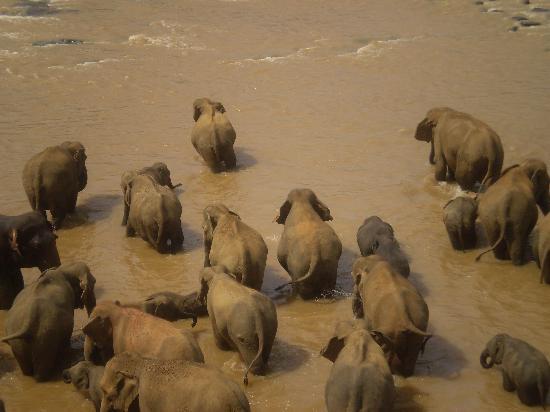Asia: elephant orphanage