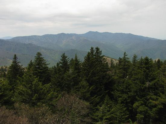 Mount Sterling: Great view looking toward Mount Guyot