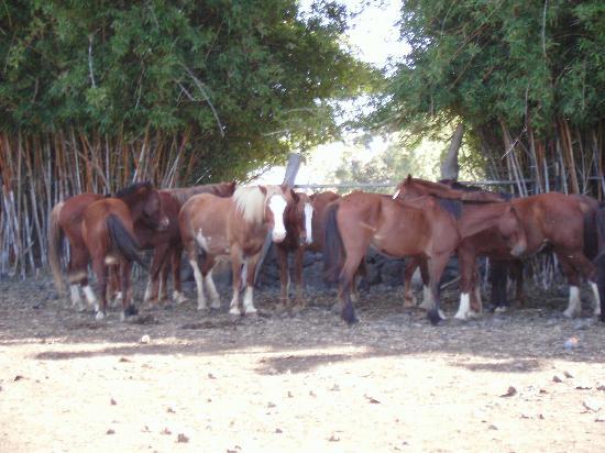 Chez Cecilia: Algunos de los caballos de Piti Pont
