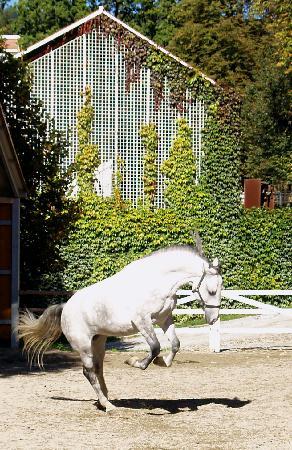Graz, Österreich: Happy colt at Piber