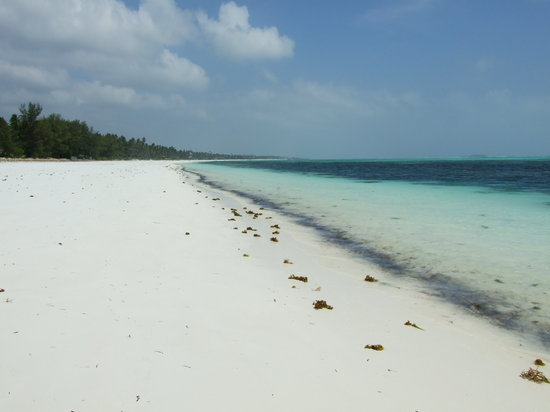 Zanzibar Archipelago, Tanzania: Pongwe, Zanzibar