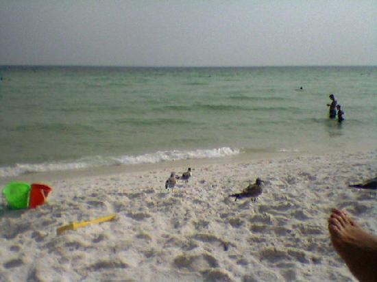 Destin Beach Club : Glorious