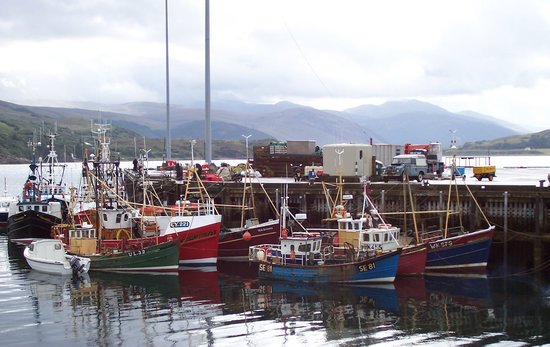 ‪‪Ullapool‬, UK: Morning in Ullapool harbour‬