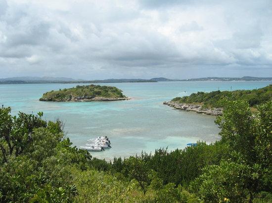 Runaway Bay, Τζαμάικα: bird island