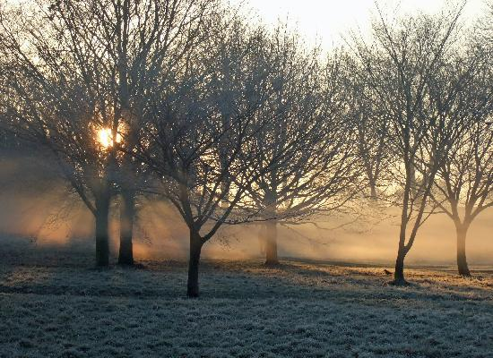 Regent's Park: Frosty morning in Regents Park