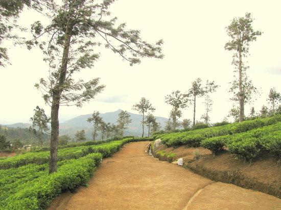 Nuwara Eliya, Sri Lanka: Mul Oya – Environment