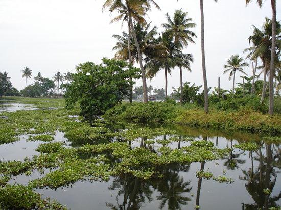كيرلا, الهند: Kerala Backwaters