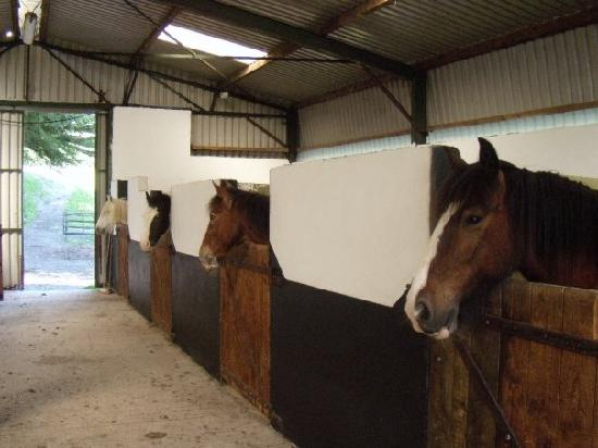 Muckross Riding Stables B&B: Riding Stables