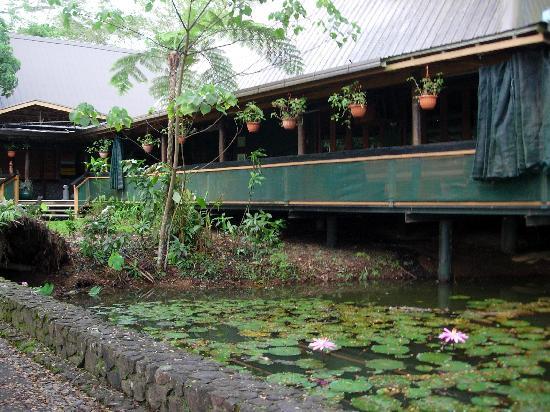 Colo I Suva Rainforest Eco Resort : hotel bar and enterance