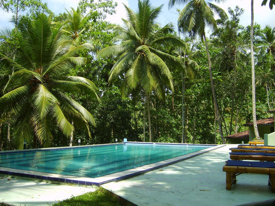 Tulip of Ceylon Nature Resort: The pool