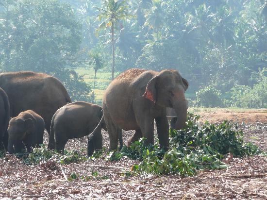 Eden Resort & Spa : Elephant orphanage