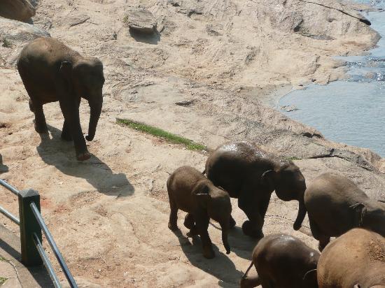Eden Resort & Spa : Elephants having bath