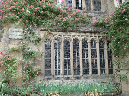 Bakewell, UK: more climbing roses at Haddon Hall