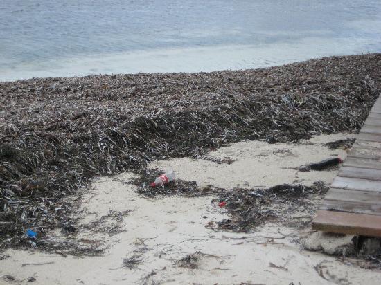 Captain Morgan's Retreat : The beach