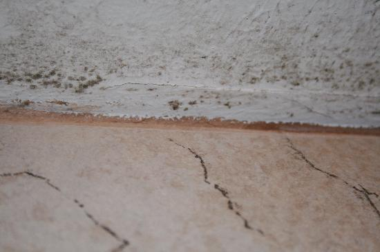 La Quinta Inn & Suites Overland Park : mold on ceiling